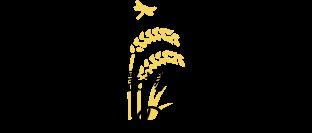 コシヒカリ農場のコシヒカリ3つの特長