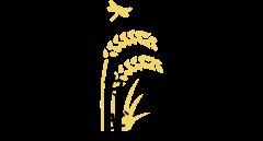 コシヒカリ農場のフォトギャラリー