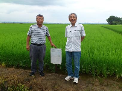 新潟県認証特別栽培米コシヒカリの圃場にて